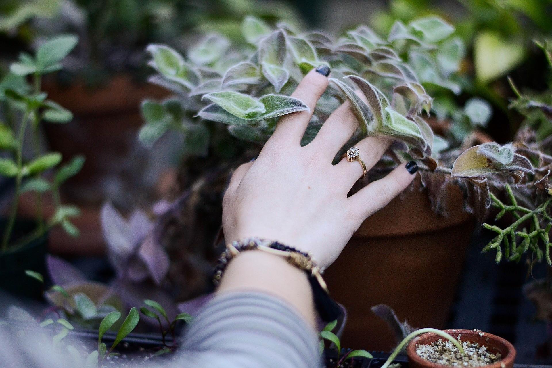 手の写真1