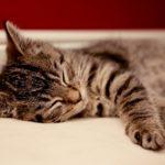 睡眠負債の解消法!貯めない方法を知って美肌と健康をキープ!