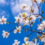 春は紫外線の季節!春スキンケアのポイントは?